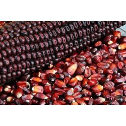 Purple Corn Powder Organic